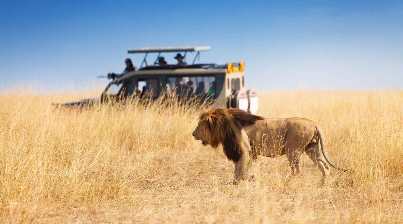 Comment s'habiller correctement afin de réussir son safari dans un pays d'Afrique